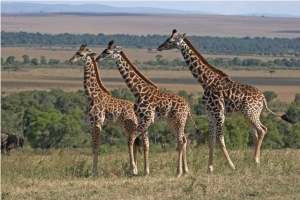 African travel - Serengeti_National_Park