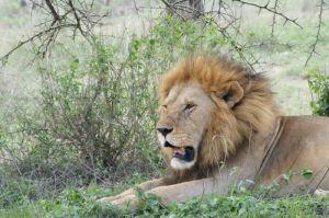 African travel - Tarangire-National-Park