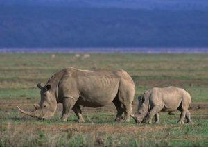 african travel - ngorongoro-rhino
