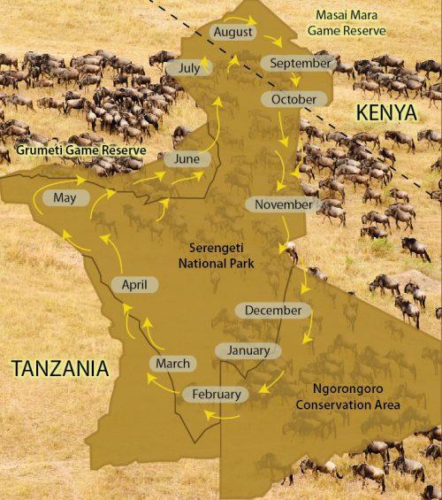 serengeti_wilderbeasts_migration_map